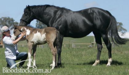 Miss Morocco with a previous filly foal at foot