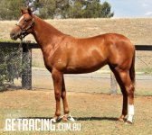 Athletic well grown filly, very good walker!!!