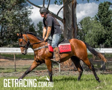 Our SIZZLING ex NOVA colt in pre-training at WILD OAKS