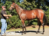 Our EXCELEBRATION ex NUCLEAR FORCE Bay Filly - At the Spelling Farm 31 March