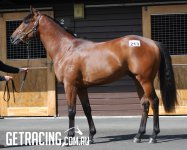 Lot 213 Reliable Man x Finkican Colt - Conformation